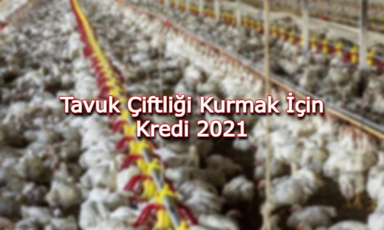 Tavuk Çiftliği Kurmak İçin Kredi 2021