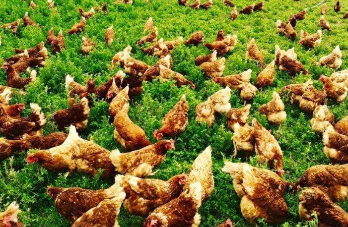 salma tavukculuk destegi alabilecekler