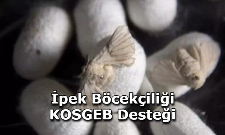 İpek Böcekçiliği KOSGEB Desteği