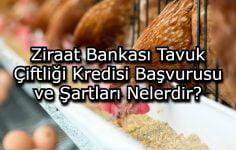Ziraat Bankası Tavuk Çiftliği Kredisi Başvurusu ve Şartları Nelerdir?
